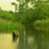 प्रकृति को जानने के लिए जाएं जंगल में