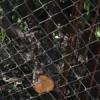 गुलाब बाग से चंदन के पेड़ चोरी का प्रयास