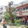 बिना स्वीकृति हरा पेड़ काटा