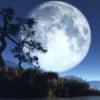शरद पूर्णिमा प्रकृति उत्सव 29 अक्टूबर को
