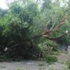 कटारिया की कार पर गिरा पेड़