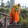 झण्डे हटाने पर गुस्साए भाजयुमो कार्यकर्ता