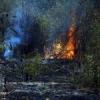 बाघदड़ा नेचर पार्क में फिर सुलगी आग