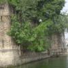 शहरकोट पर पेड़-पौधों से आ रही दरारें