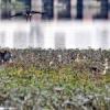 झील प्राधिकरण में हो सशक्त नागरिक सहभागिता