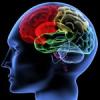 न्यूरो डवलपमेंट तकनीक से लकवे के उपचार पर कार्यशाला 27 से