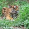 टी-24 को रास आई बायोलोजिकल पार्क की हरियाली
