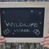 वन्यजीव प्राणी सप्ताह 1 से, होंगे विविध कार्यक्रम