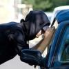 देखते-देखते ही कार चोरी