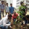 पर्यावरण की दृष्टि से हरित वृक्ष महत्वपूर्ण