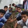 छात्रों ने जानी पौधों की कटाई एवं ग्राफ्टिंग की विधि