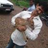 पुजारी के कब्जे से हिरण के बच्चे को छुड़ाया