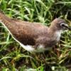 मेवाड़ में शीतकालीन प्रवासी पक्षियों का आगमन शुरू