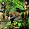 कैसे कम हों मानव एवं वन्य जीवों के मध्य संघर्ष!