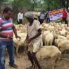 पांच दिवसीय पशु चिकित्सा शिविर प्रारम्भ